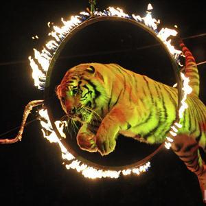 Цирки Солнечнодольска
