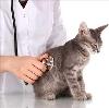 Ветеринарные клиники в Солнечнодольске